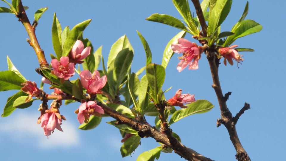 City S New Interactive Maps Pinpoint Flowering Trees Cambridge
