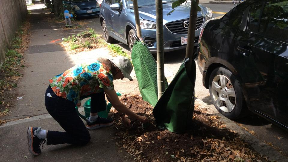 Photo of woman on one knee at base of gator-bagged tree, weeding